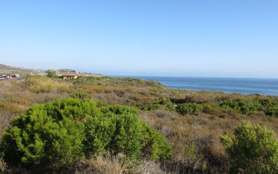 Monthly Hike: Sunday, June 7th – Crystal Cove